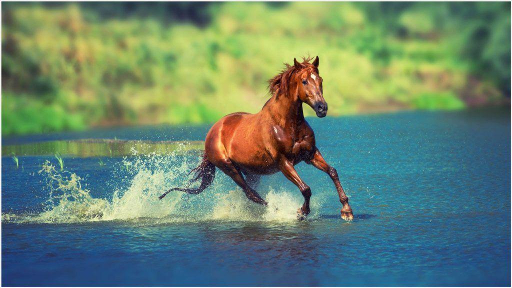 Wild Horse Running 4K Wallpaper