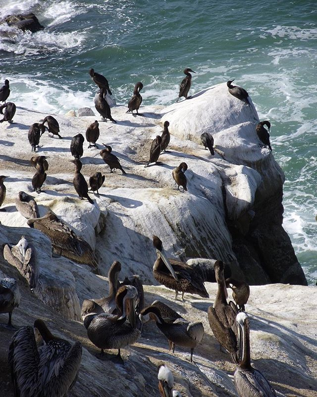 Visit the La Jolla Cove in San Diego! You may be a bit