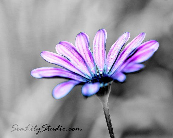 Purple Haze 16x20 : purple daisy african lavender pink blue flower blossom garden spring  monochrome home decor fine art print. $75.00, via Etsy.