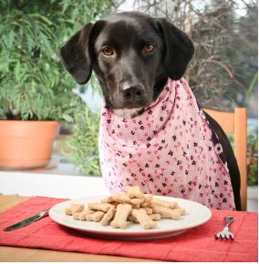 Wanna Spend Your Lunch Break W Pooch Here Are Dog Friendly Restaurants