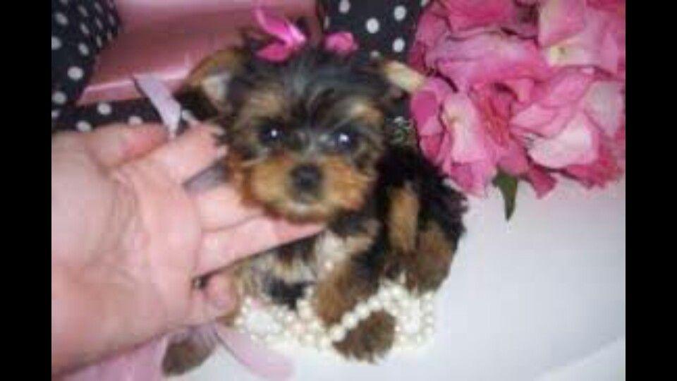 Prett Puppy Things I Love Pinterest