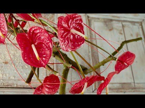 A Red Anthurium Arrangement Flower Factor Tutorial Powered By Fiore Anthuriums Youtube Mit Bildern Blumen Gestecke Deko