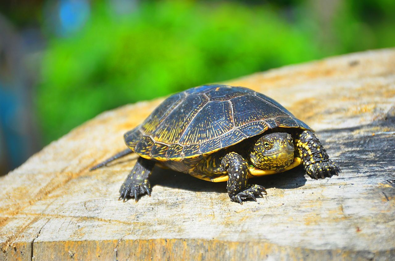 Details Of Small Pet Turtles That Stay Small 2020 Pets News And Review