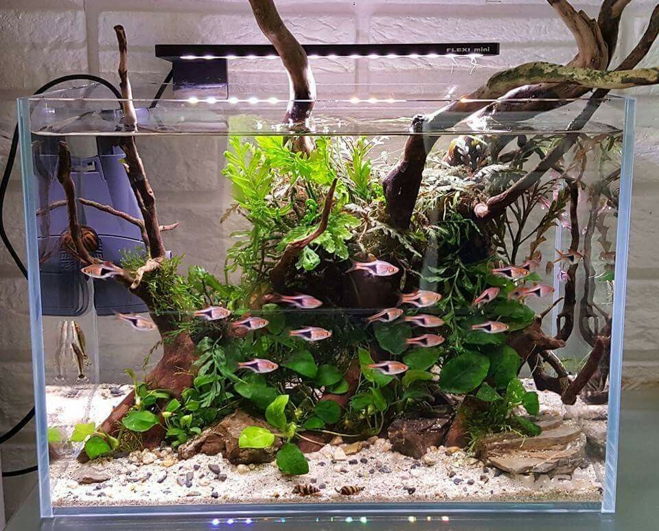 Aquarium Store, Aquarium Setup, Nature Aquarium, Aquarium Design, Aquarium  Ideas, Aquarium Fish, Freshwater Aquarium, Aquascaping, Fish Tank