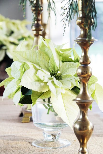 A Country Farmhouse Tis The Season Poinsettia Centerpiece Diy Christmas Wedding Decorations Diy Christmas Wedding Centerpieces