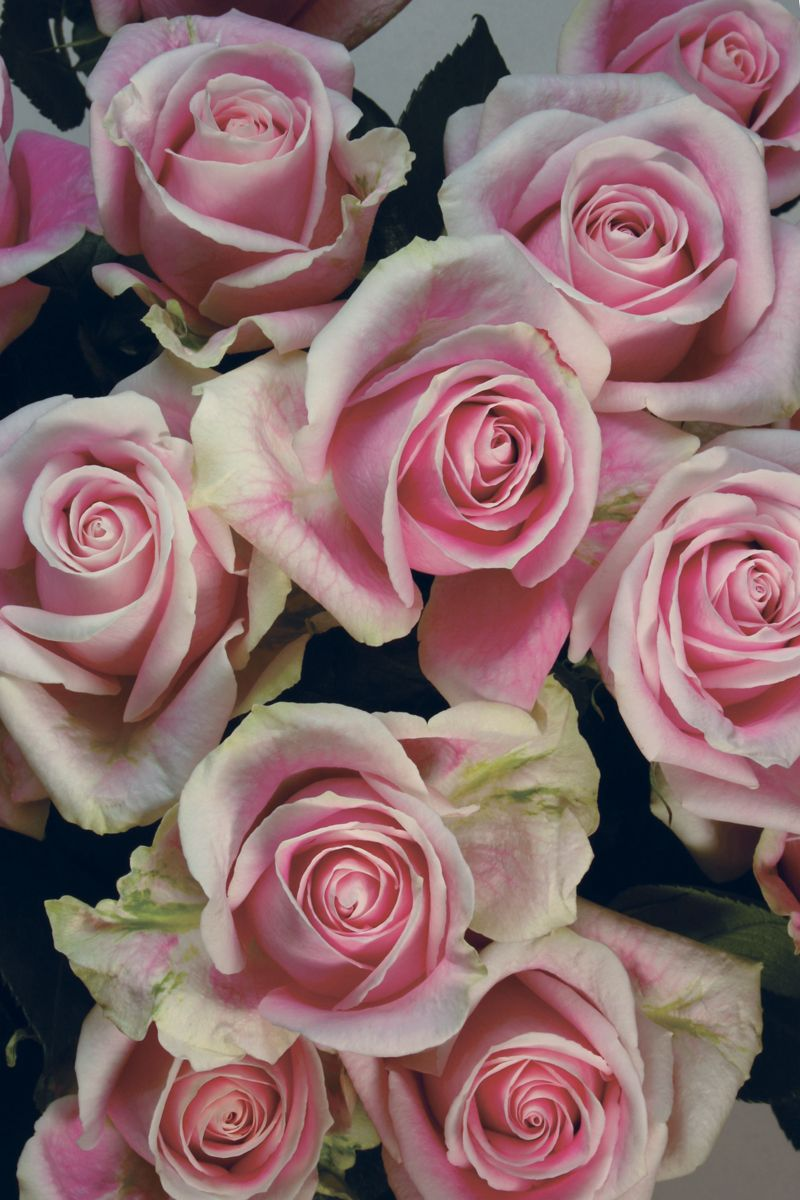 This Dusty Pink Rose Speaks To All Of The Romantics Out There