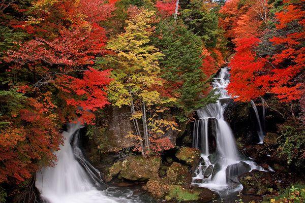 【竜頭の滝の紅葉】ピーク時の美しさはまさに錦絵のごとし今年もまもなく見頃です Nikko Tochigi