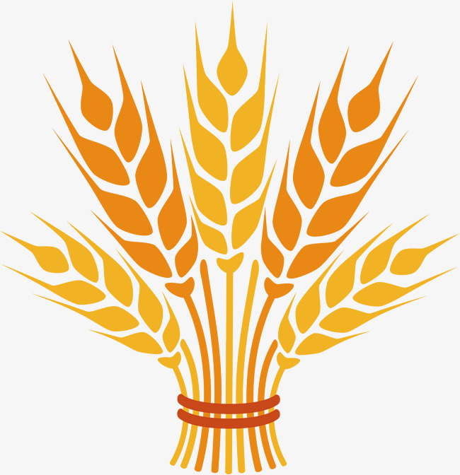 Wheat Png Vector Element Wheat Vector Wheat Vector Crop Png And Wheat Drawing Wheat Design Wheat Vector
