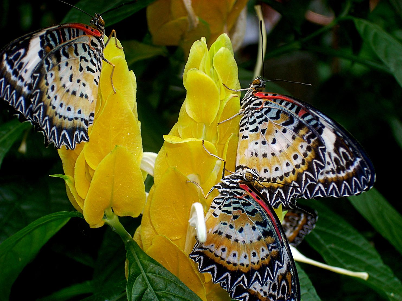 pictures of butterflies xaats album flowers picture city