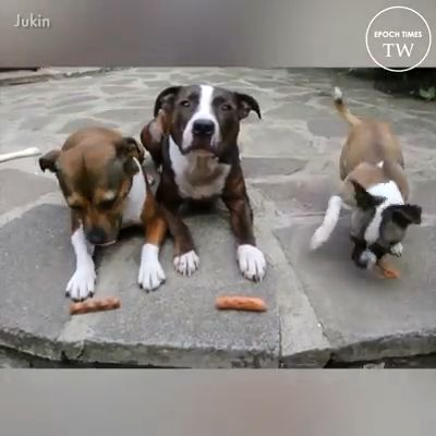 See Lion Is mine favourite whats your? Please follow Animals Board for more videos