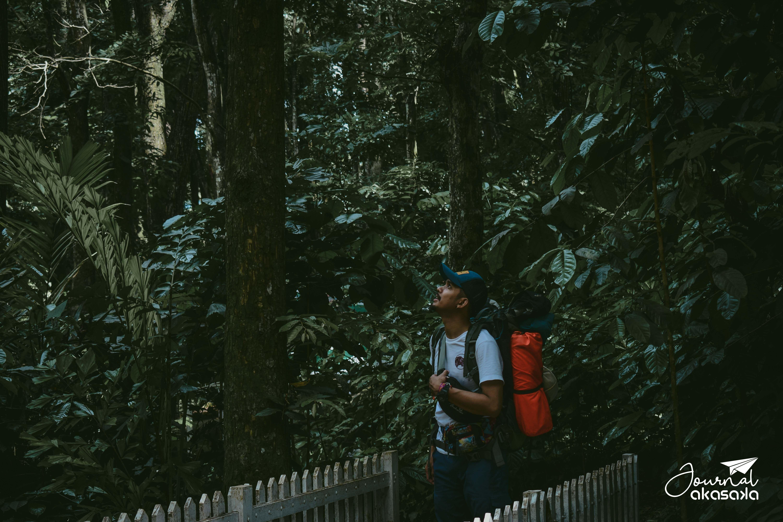 Sejak Kecil Kita Sudah Diajarkan Bahwa Hutan Adalah Paru Paru Dunia Membantu Menyerap Karbon Dioksida Dan Gas Beracun Lain Dan Memprod Habitat Paru Paru Hidup