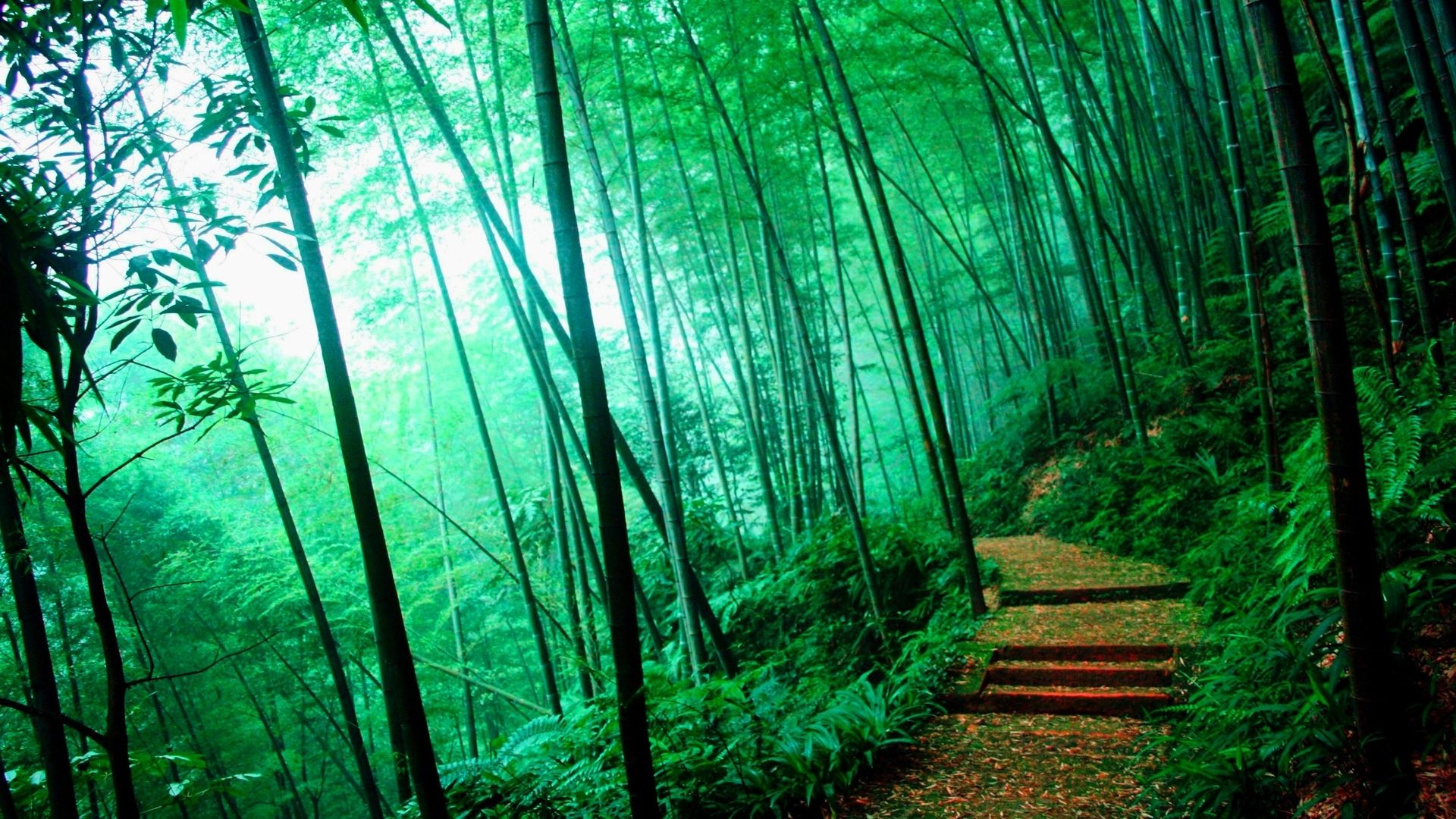 Bamboo Forest Bamboo Forest Hd Desktopmobile Wallpaper Gloria
