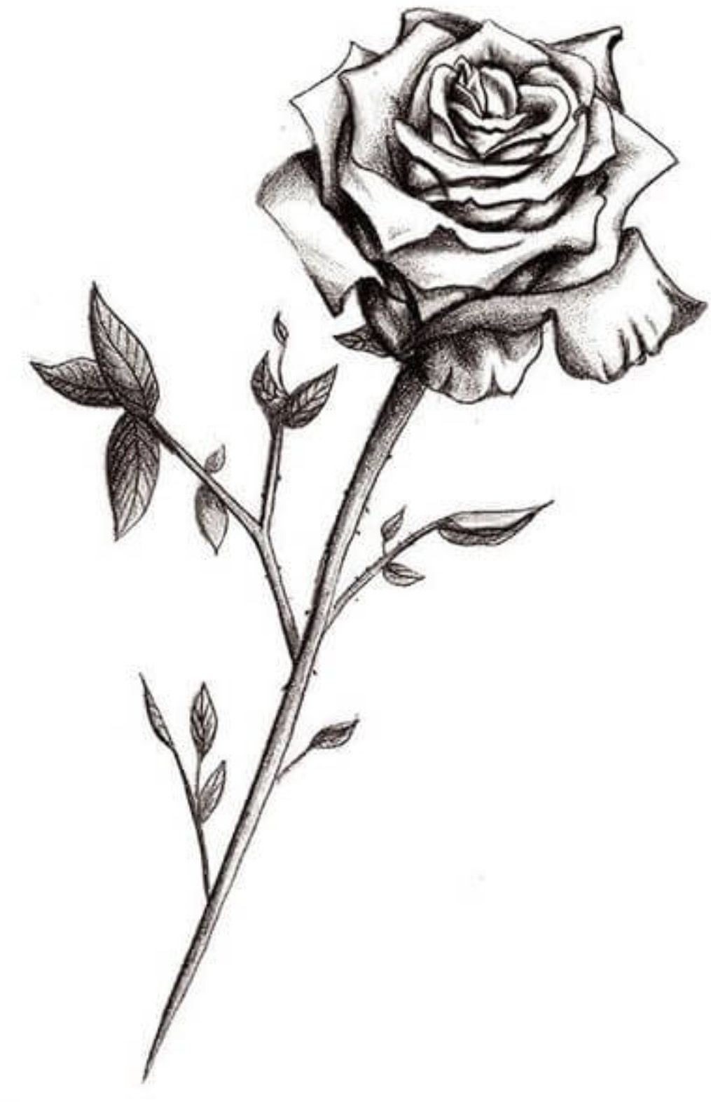 Flowers Piercings Pinterest Rose Tattoos Tattoos And Black