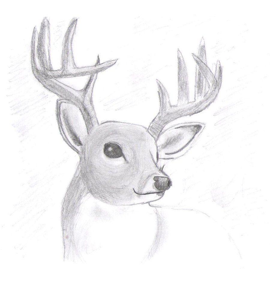 Related Image Deer In 2019 Drawings Realistic Animal Drawings