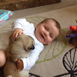 A Baby Playing With Pug Puppies Is Literally The Cutest Thing On
