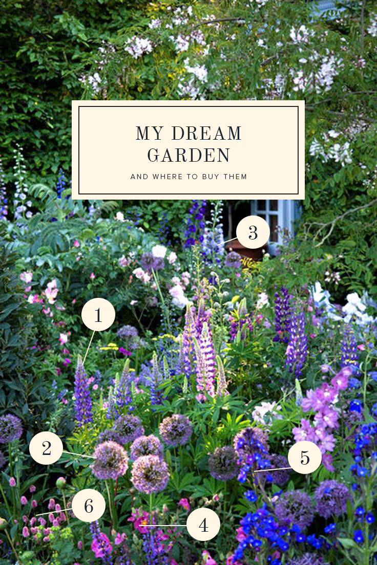 The gardens of my dreams and where to buy them   gardening ...