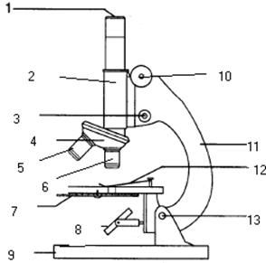 Compound microscope fill in diagram wiring library introduction to the microscope lab science pinterest rh pinterest com compound light microscope labeled compound light ccuart Image collections