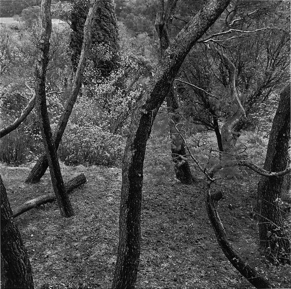 HARRY CALLAHAN - Eleanor, Aix-en-Provence, 1958