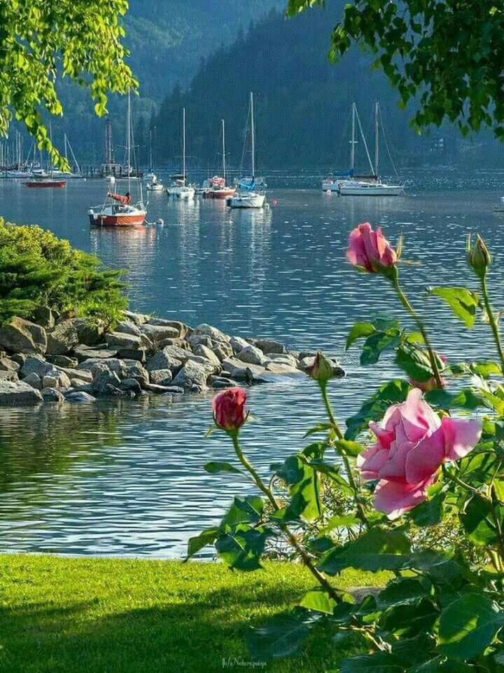 Yachts In The Sunny And Quiet Bay I Wish Each Of These Boats Could Find A Pier In Its Bay Beautiful Landscapes Beautiful Nature Nature Photography