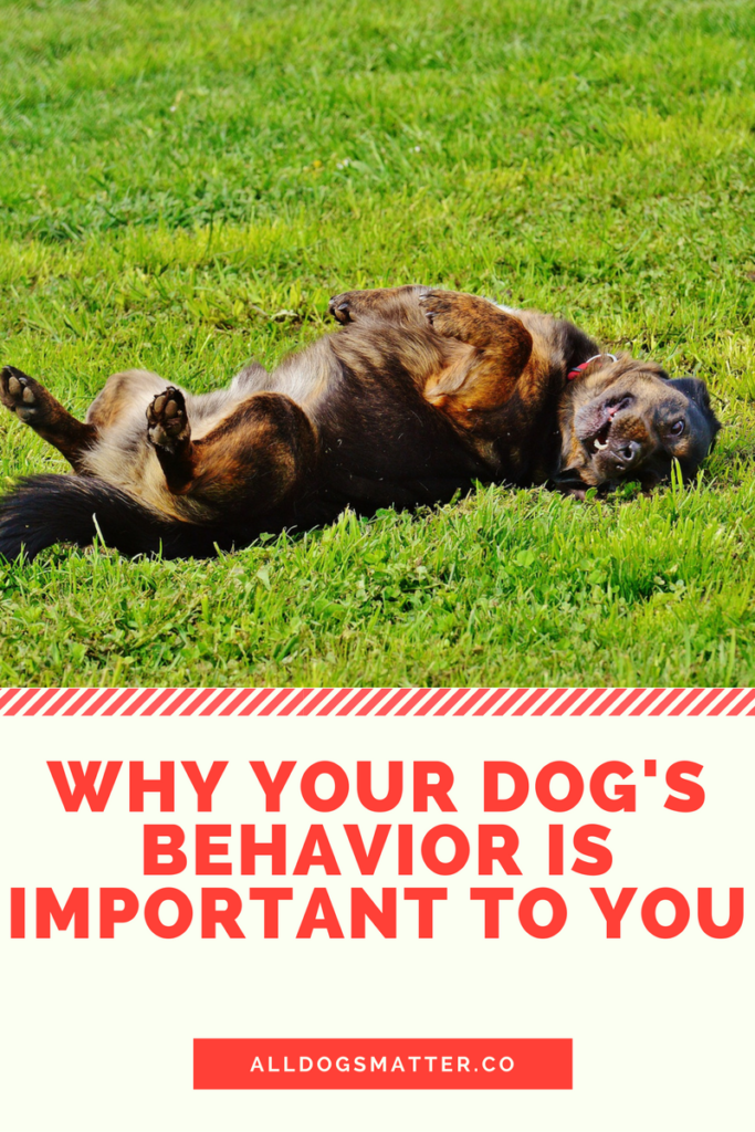 Why Your Dog's Behavior Is Important To You? - Just for Die Hard Dog Lovers