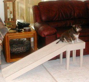 How To Build A Dog Ramp Chihuahua Meagan Fajita Texas