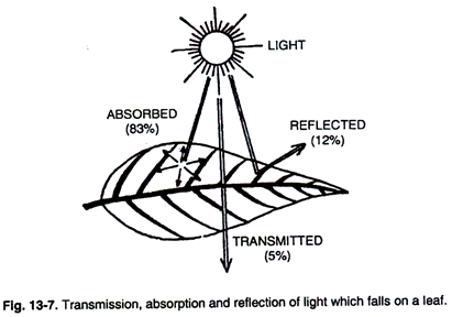 Transmission, Absorption and Reflection of Light