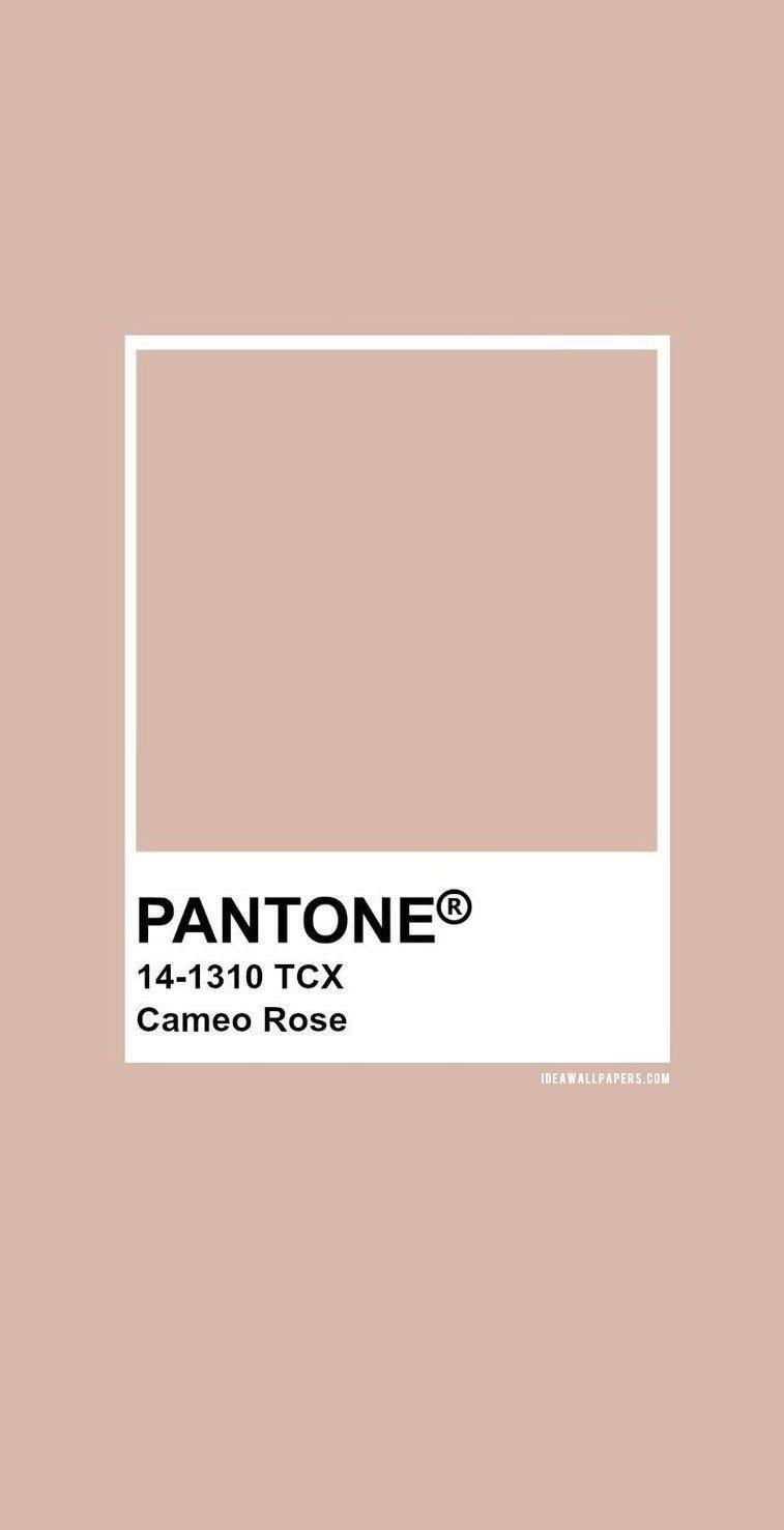 pantone cameo rose 14 1310 color neutral colors colour palettes 7680 c 3268c