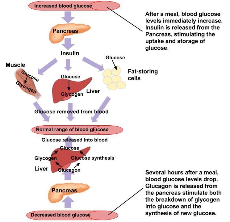 Digestion And Absorption Of Carbohydrates Human Nutrition Deprecated Human Nutrition Digestive Disease Digestion
