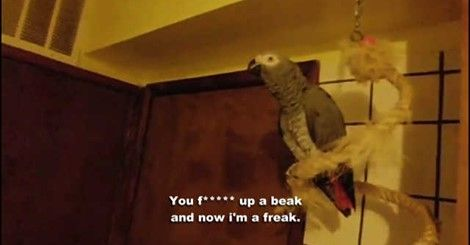Rappin' Parrot