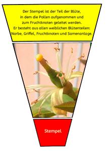 Pflanzenteile und ihre Funktionen | Pinterest