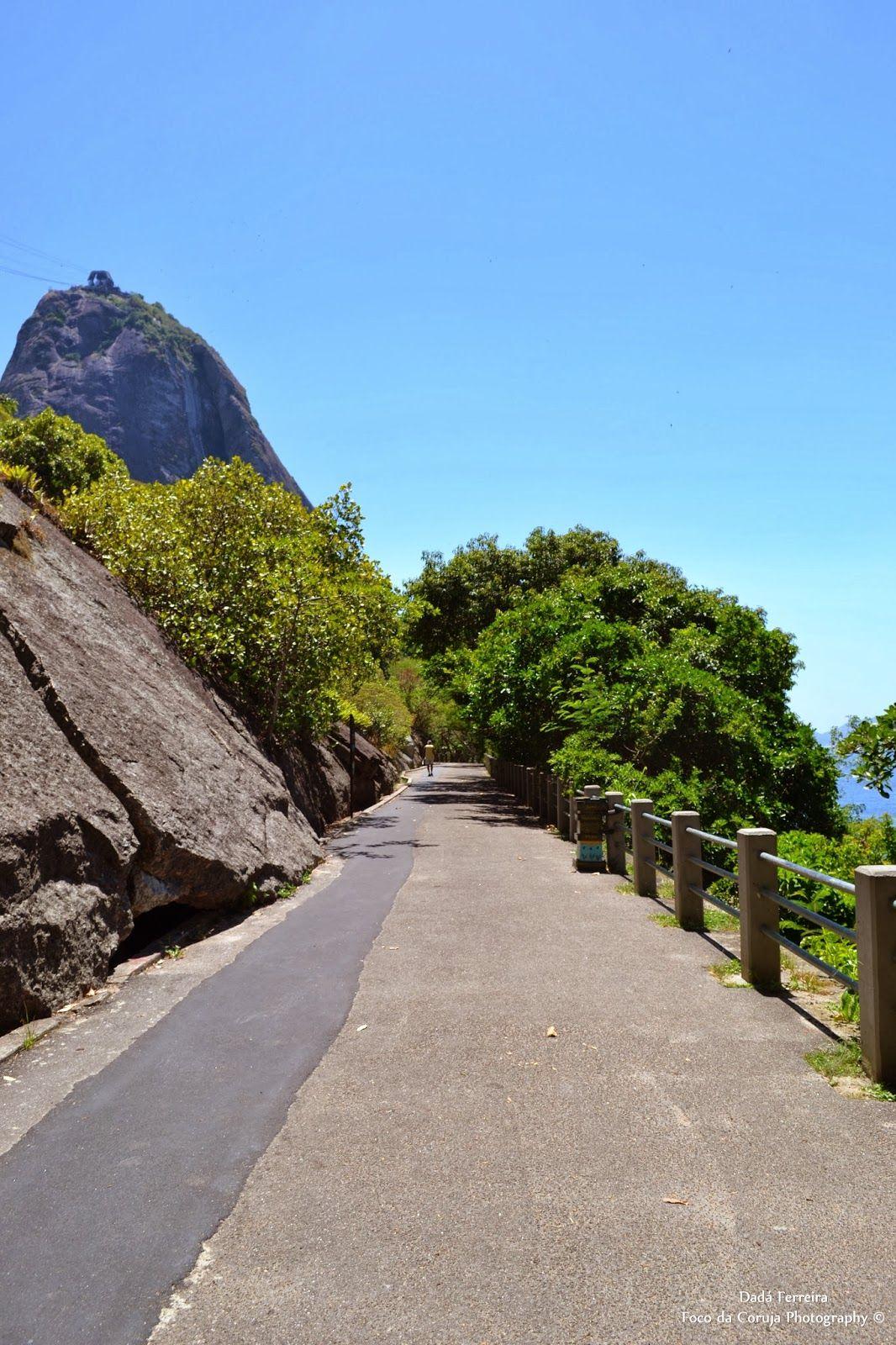 Foco Da Coruja Rio De Janeiro Rio Lugares