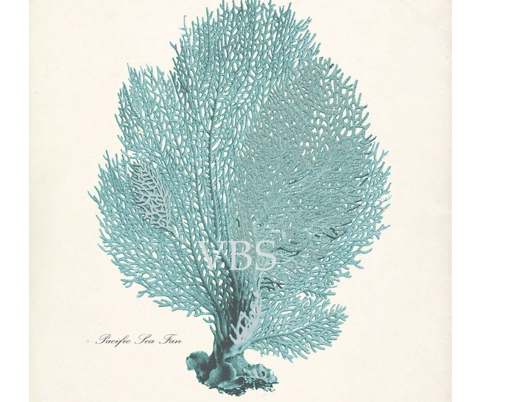 Antique beach decor sea fan natural history 8x10 print seafoam vintage sea coral print sea fan in seafoam blue framed for bathroom wall art amipublicfo Images