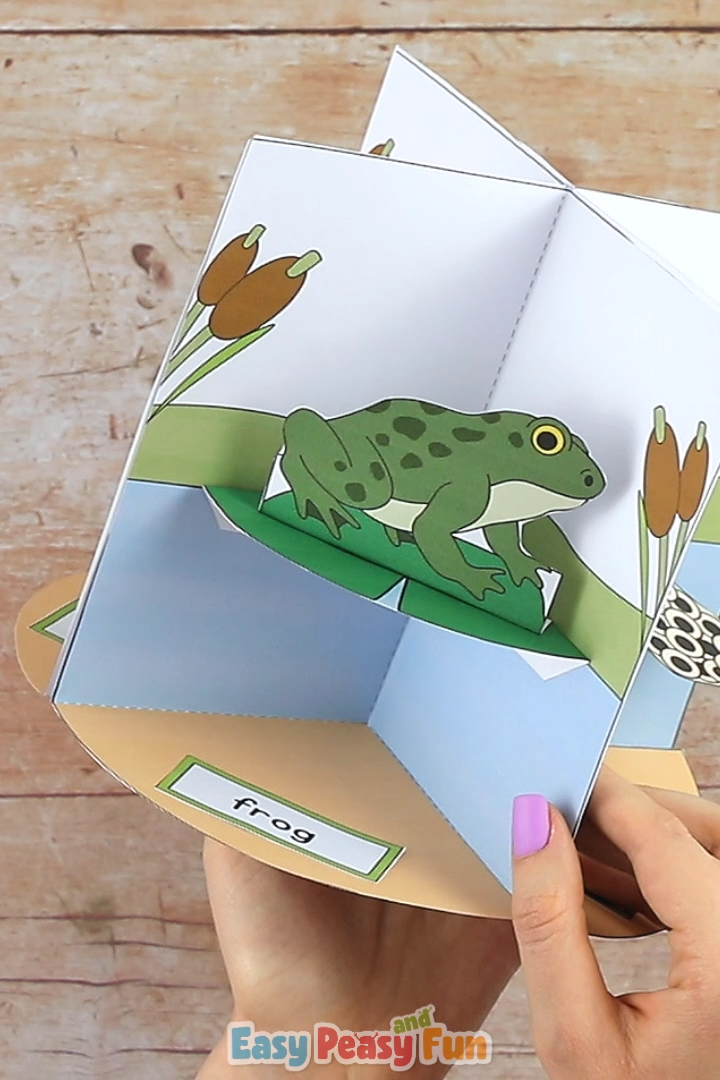 Print out our 3D Frog Life Cycle Craft diorama template and make a fun interactive display.