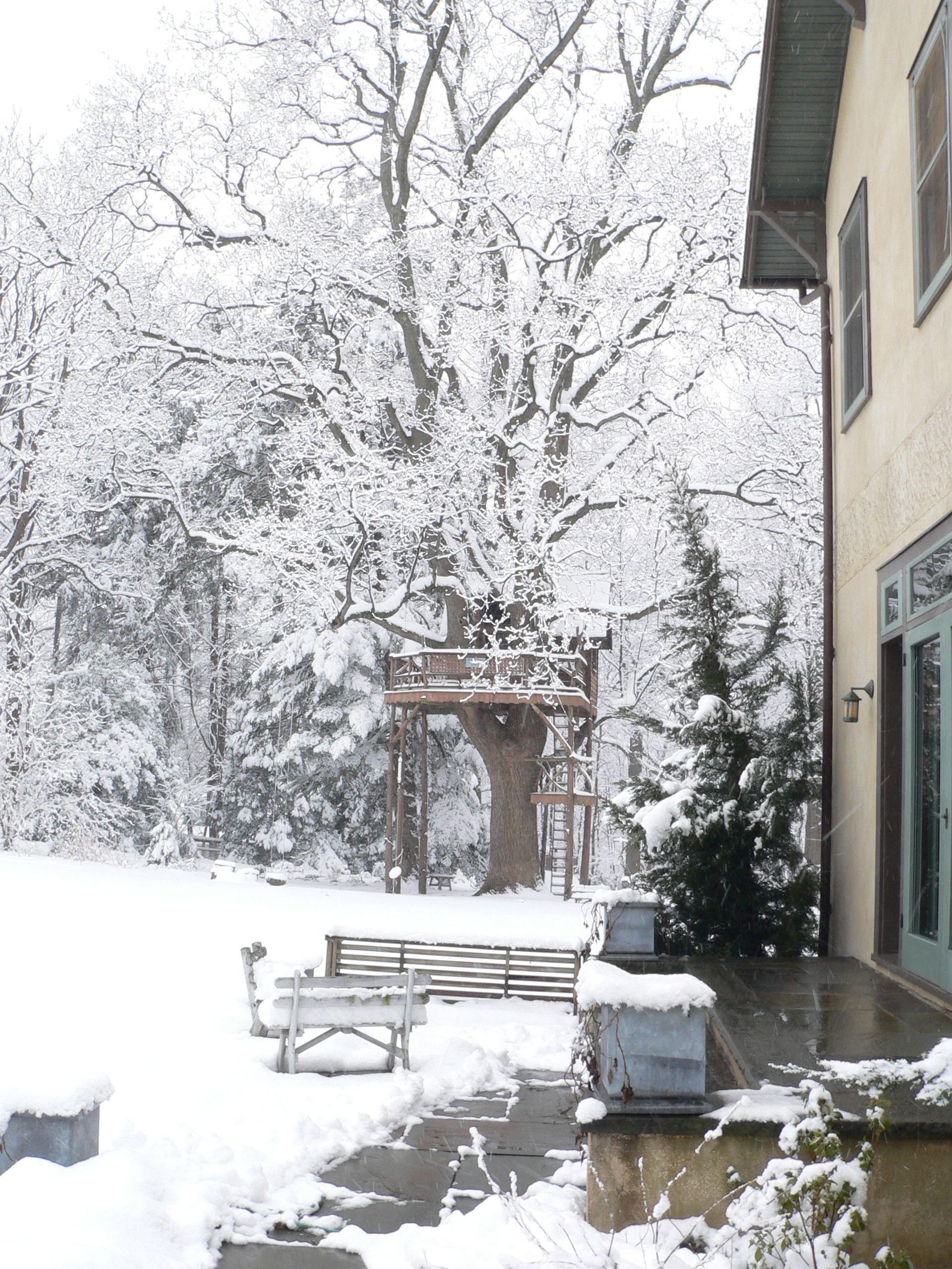 Tulip Tree Lodge Treehouse One Snowy Day Photo By