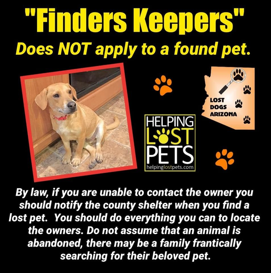 If You Find A Lost Dog Please Do Everything You Can To Find Its Family Do Not Assume That An Animal Is Abandoned There May Be Losing A Dog Losing A