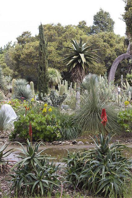 Cactus Garden, Stanford University, Palo Alto, CA. Photo: Acrofish, Via