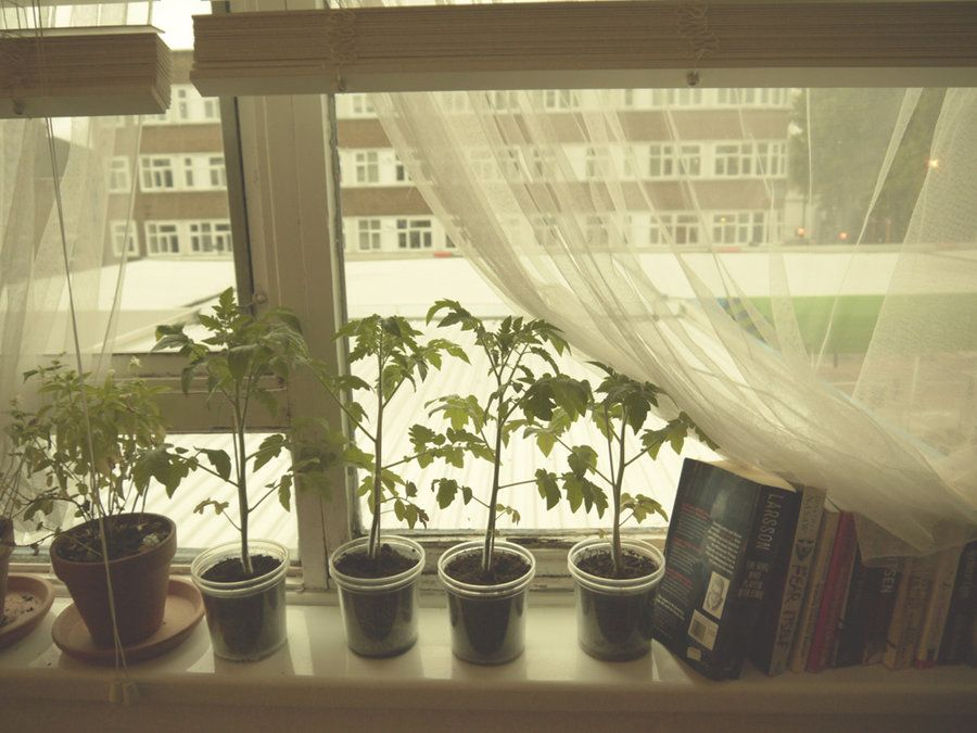 some plants for the window.