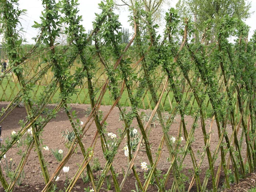 17 beste ideeën over beeteinfassung weide op pinterest - diy, Garten und Bauen
