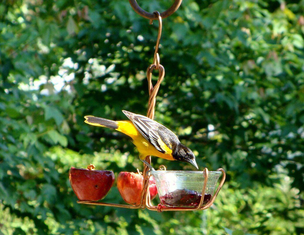 Fruit and Jelly Decorative Bird Feeder Bird feeders