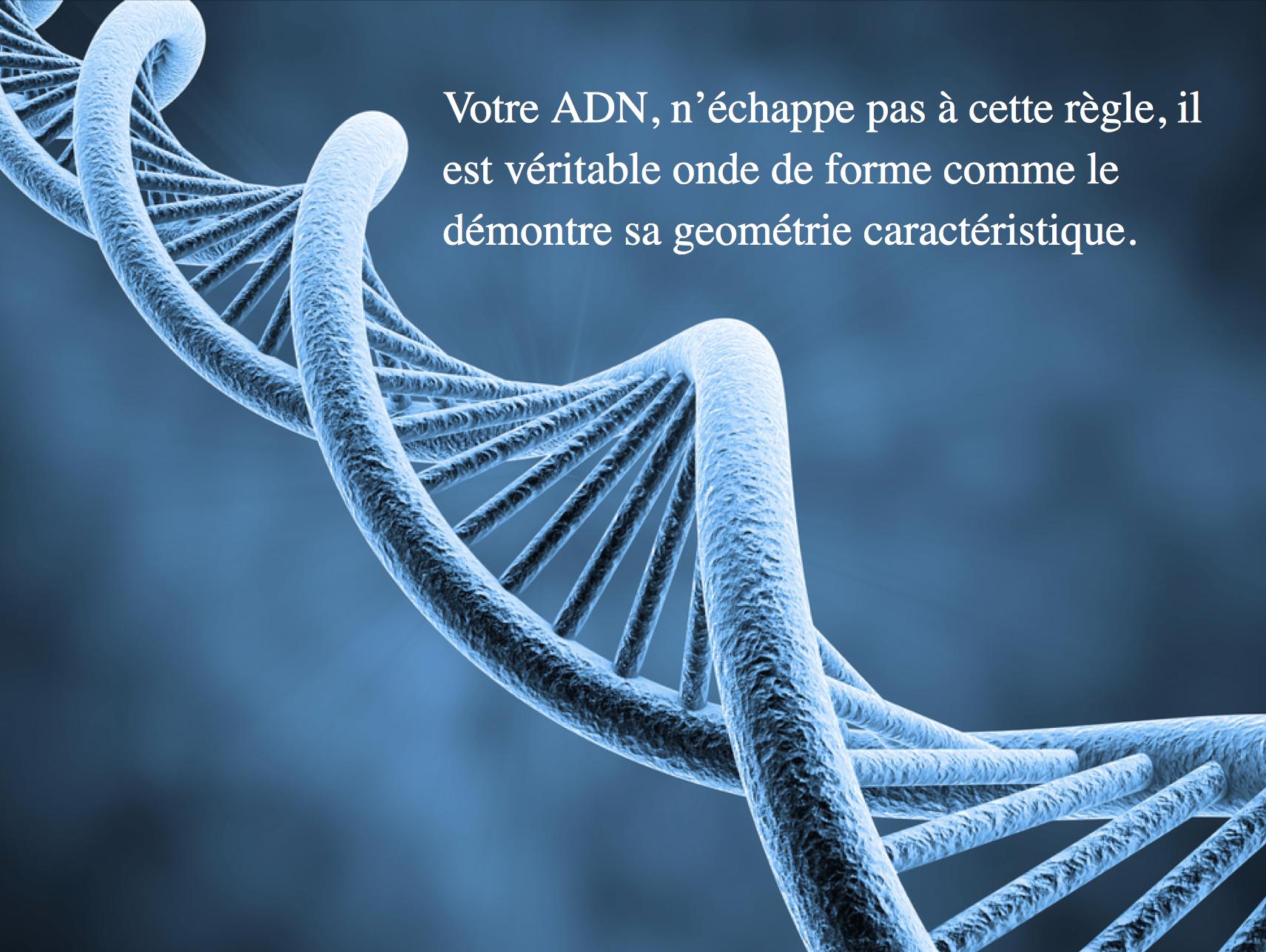 onde formes , ADN, image de synthèse, 3D, le son influence l'adn