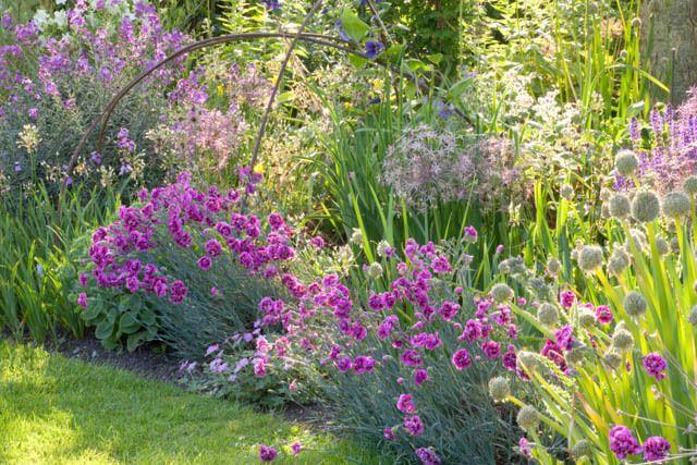 A Charming Border Idea With Alliums Garden Pinks Wallflowers Plants Plant Combinations Garden Shrubs