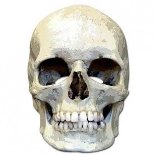 """Laadukas ja täysin aidon näköinen valokuvasta tehty pahvinen muotoon leikattu """"pääkallo"""" naamio silmäaukoilla ja joustavalla kiinnitysnarulla. Koko noin 28cm x 20cm."""