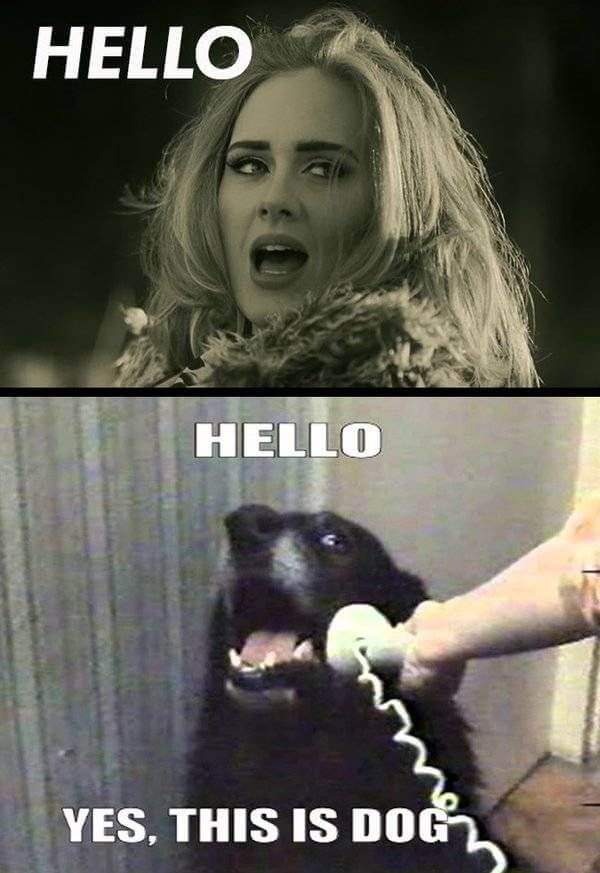 28 Adele Hello Meme Pictures Because You Really Didn T Hear That Song Enough Today Adele Hello Meme Adele Hello Meme Pictures