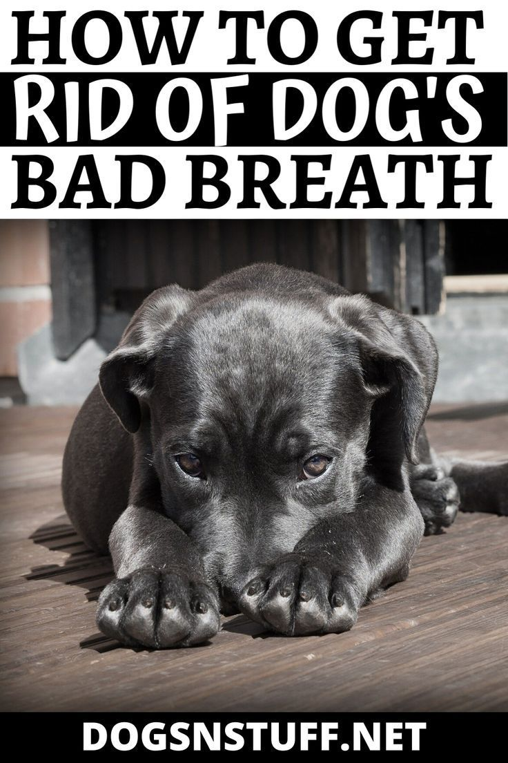 How to Get Rid of Dog Bad Breath Dogs N' Stuff in 2020