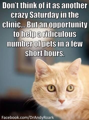 Don T Think Of It As Another Crazy Saturday At The Clinic Vet Tech Humor Veterinary Humor Vet Medicine