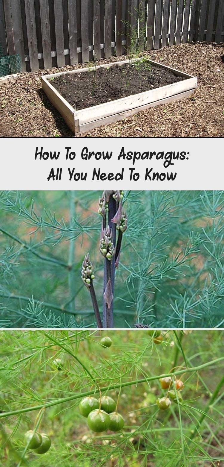 En blog en blog in 2020 growing asparagus container