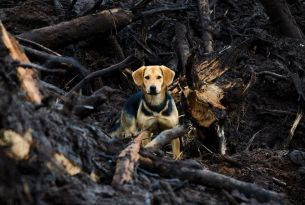 Protect your pet in a bushfire