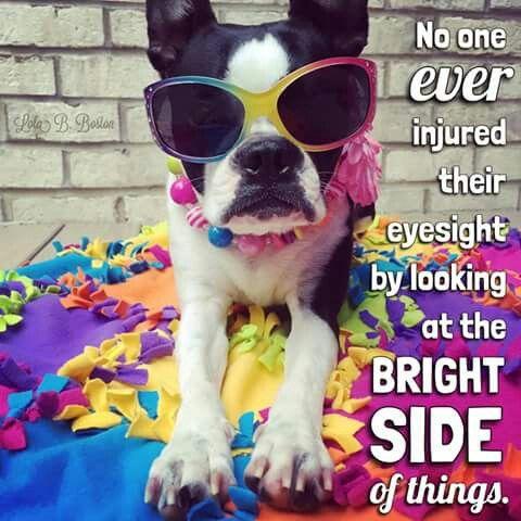 Pin By Heidi Engler On Boston Terriers Crazy Gracie Boston