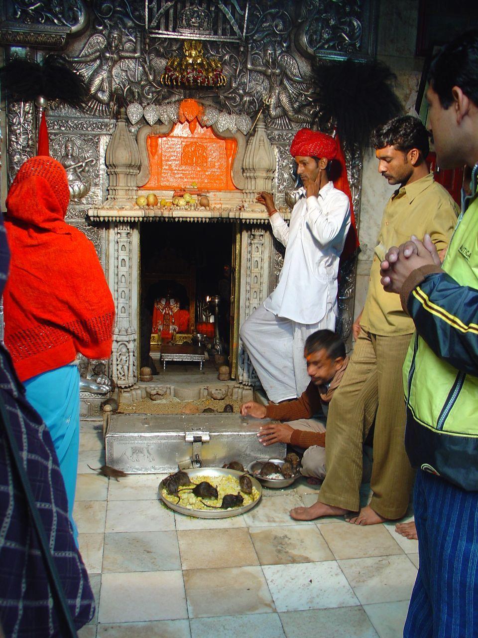 Risultati immagini per sadhu karni mata