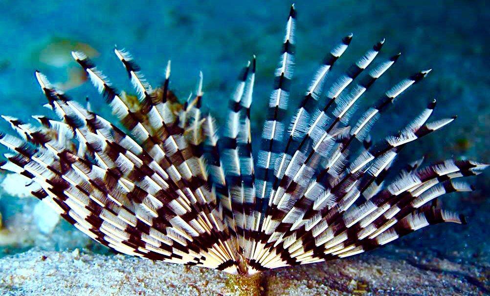 Tube Worm Reef Tank Fish Pet Worms